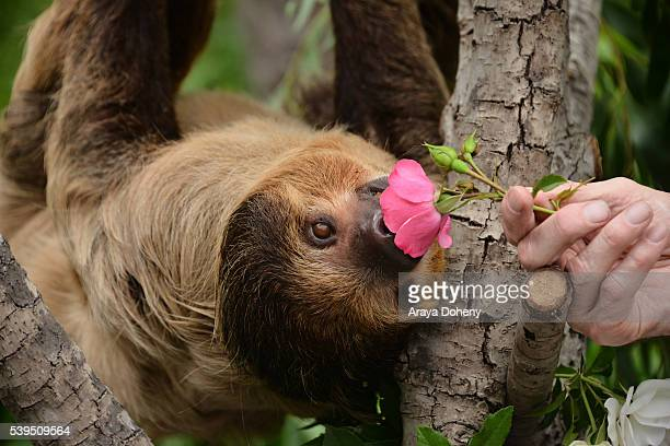 The Sloth, Charlie Dalton Shenanigans attends The Greater Los Angeles Zoo Association's 46th Annual Beastly Ball at Los Angeles Zoo on June 11, 2016...