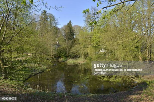The small pond in middle wild nature in springtime