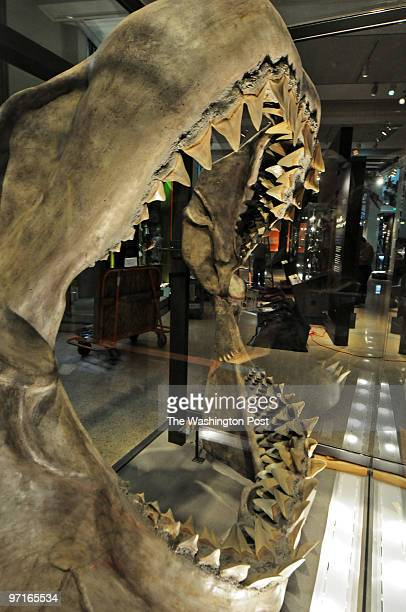 LEARY / TWP WASHINGTON DC The Smithsonian National Museum of Natural History will unveil its' new Ocean Hall next week Pictured the fossilized jaw of...