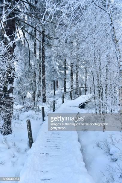 The snowy wooden footpath trough fairytale decor