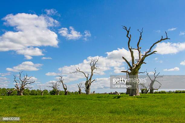 The so called petrified forest at Mundon in Essex