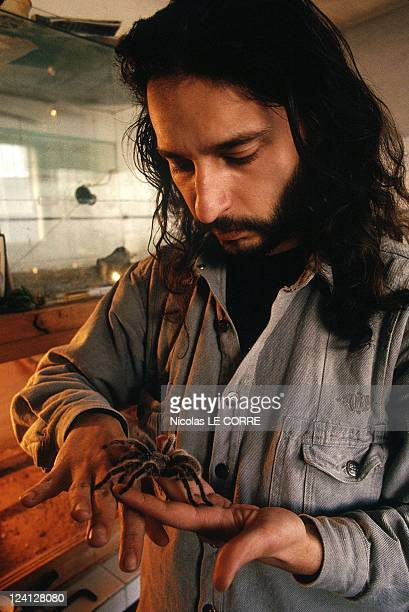 The Sofia zoo In Sofia Bulgaria In February 1998 Veterinarian with trapdoor spider