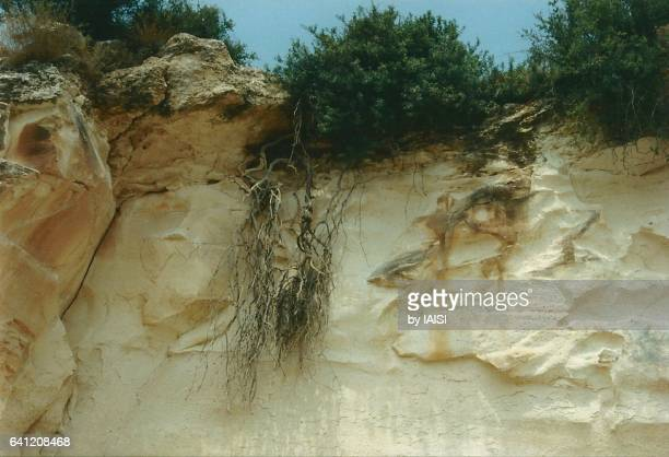 The soft chalk of Bet Guvrin / Maresha in the Judean Lowlands