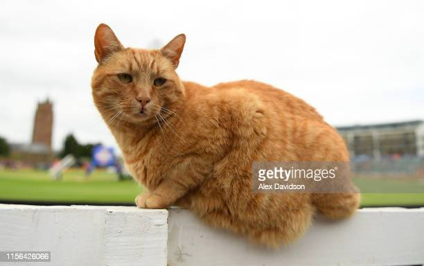 The Somerset Cricket cat called 'Brian' during the Group Stage match of the ICC Cricket World Cup 2019 between West Indies and Bangladesh at The...