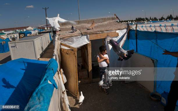 The son of Abdullah alNoeimi a Syrian refugee holds one of their pigeons on the roof of his trailer at Killis Camp at the Turkish Syrian border in...