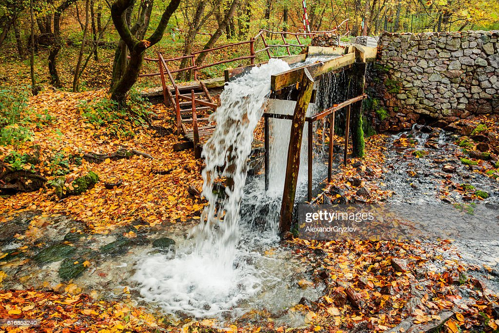 the source of the stream in the autumn forest : Stock Photo