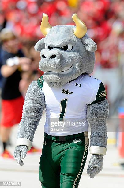 The South Florida Bulls mascot performs during the game against the Maryland Terrapins at Byrd Stadium on September 19 2015 in College Park Maryland
