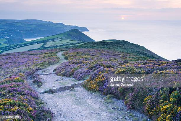 the south west coast path descending great hangman towards little hangman and combe martin bay. exmoor national park. devon. england. uk. - exmoor national park 個照片及圖片檔