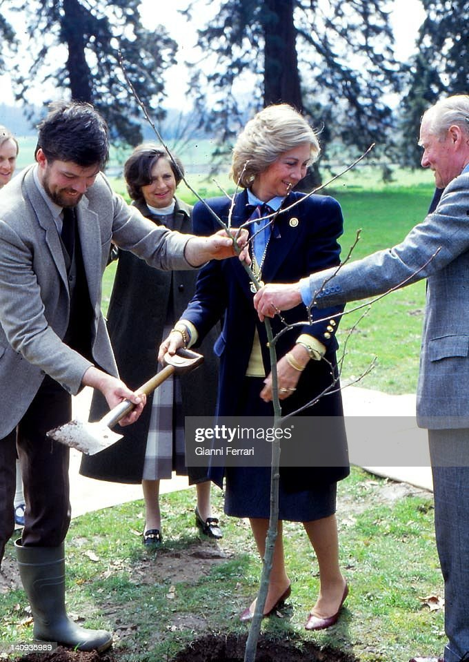 The Queen Sofia Plants A Tree : News Photo