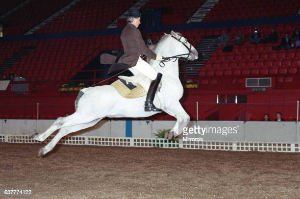 The Spanish Riding School rehearsing for their opening night at Wembley One of the horses performing a Capriole which means all four feet off the...