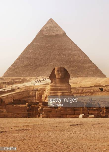 the sphinx and pyramid - sphynx hairless cat stock photos and pictures