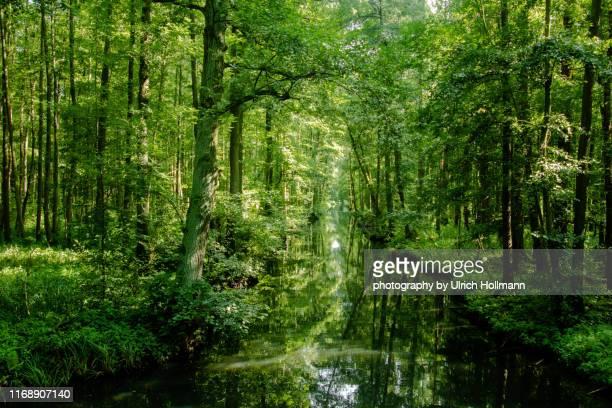 the spreewald biosphere reserve, brandenburg, germany - land brandebourg photos et images de collection