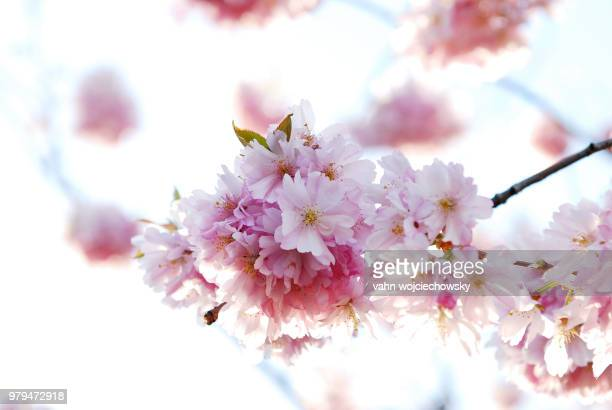 the spring is back - vahn stock pictures, royalty-free photos & images