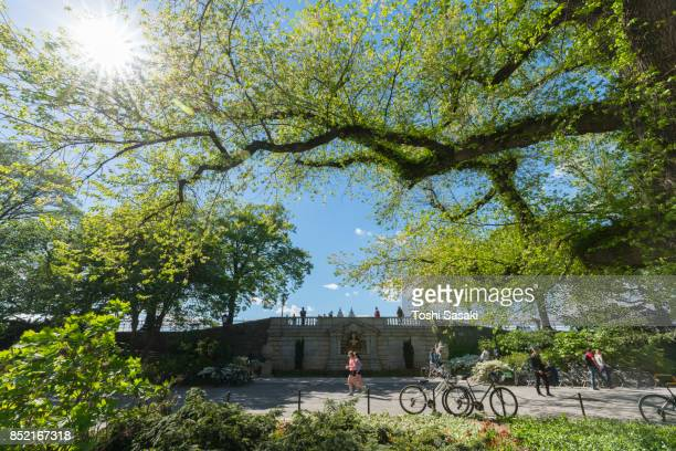 the spring sunlight illuminates the fresh green trees, leaves, people and pathway at central park new york. - mensch im hintergrund stock-fotos und bilder