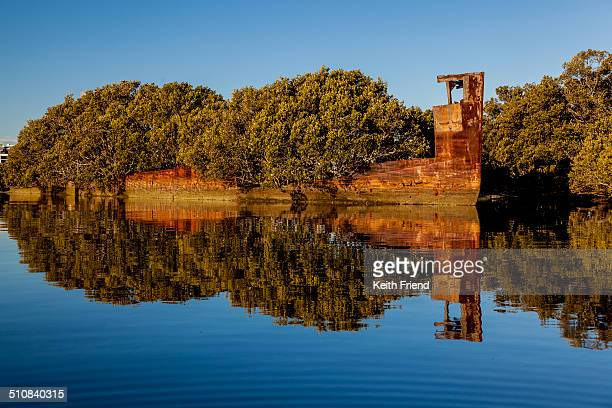 The SS Ayrfield sits on the shallow harbour bottom with mangroves growing out of her rusting shell. Built in 1911 she was scuttled in 1972 in...