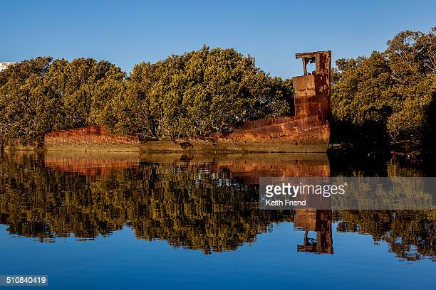 The SS Ayrfield sits on the shallow harbour bottom with mangroves growing out of her rusting shell Built in 1911 she was scuttled in 1972 in Homebush...