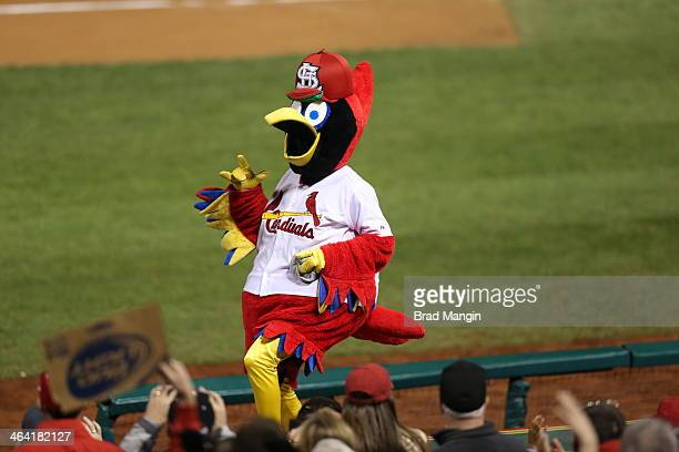 The St Louis Cardinals mascot Fredbird pumps up the crowd during Game 5 of the 2013 World Series against the Boston Red Sox at Busch Stadium on...