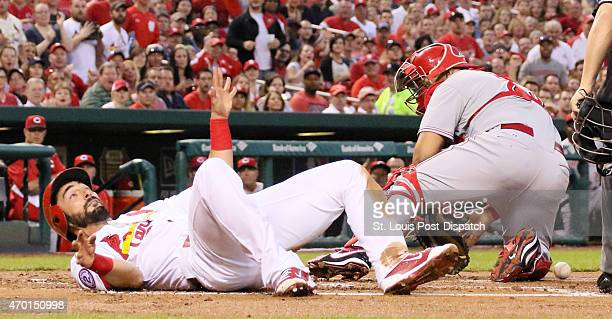 The St Louis Cardinals' Matt Carpenter lands on his back after going over Cincinnati Reds catcher Brayan Pena to score in the first inning on Friday...