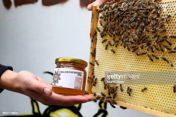The St Pauli Ewaldhoney is pictured at Millerntor Stadium on June 23 2017 in Hamburg Germany St Pauli are keeping bees inside the clubs...