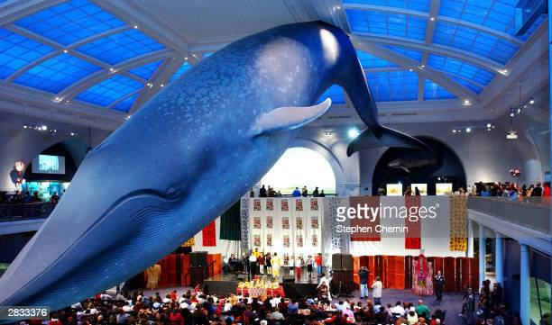 The stage where performers celebrate Kwanzaa is dwarfed by the huge blue whale that hangs in the Milstein Family Hall of Ocean Life during a Kwanzaa...