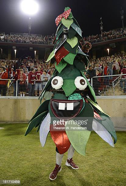 The Stanford Cardinal mascot the Stanford Tree performs against the Duke Blue Devils during an NCAA football game at Stanford Stadium on September 8...