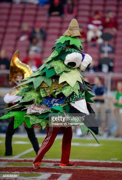 The Stanford Tree the mascot for the Stanford Cardinal performs prior to the start of the game against the Notre Dame Fighting Irish at Stanford...