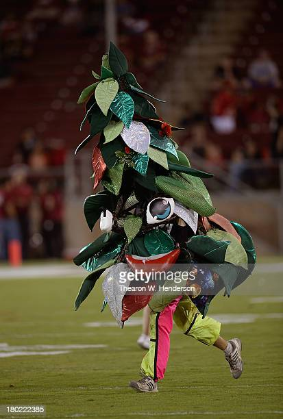 The Stanford Tree the mascot of Stanford University performs prior to an NCAA football game between the San Jose State Spartans and Stanford Cardinal...