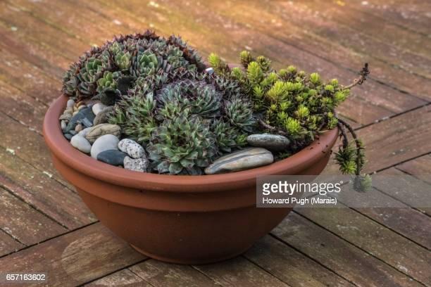The Stanley Pot Plant