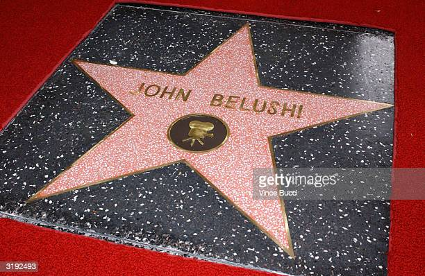 The star is unveiled at the ceremony posthumously honoring actor/comedian John Belushi on the Hollywood Walk of Fame on April 1 2004 in Hollywood...