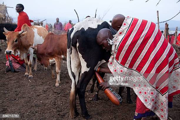 The Stars Foundation visiting SAFE in the Loita Hills near the Tanzanian border in Kenya It is mainly Maasais who live in the Loita Hills up above...