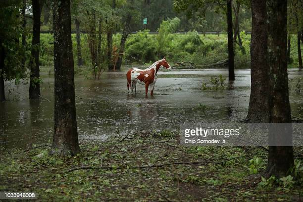 The statue of a horse stands in rising water at the Exchange Nature Park along the Neuse River September 15 2018 in Kinston North Carolina Hurricane...