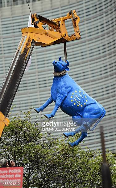 "The statue of cow painted with the European flag colors and with a writing reading ""The fair milk"" is hang in front in front of the European..."