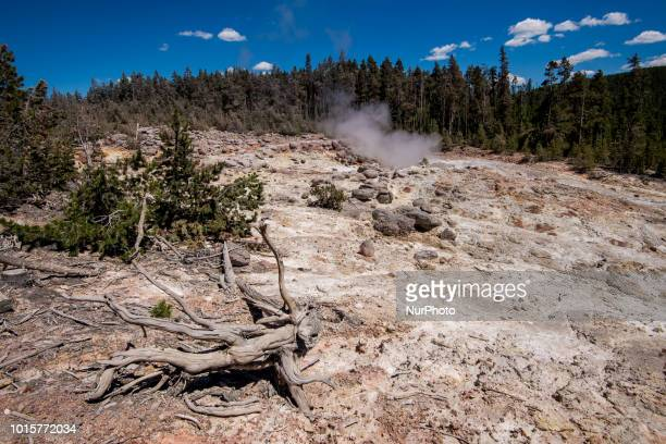 The Steamboat Geyser is seen in the Norris Geyser Basin in Yellowstone National Park in Wyoming United States on July 12 2018 It is the worlds...