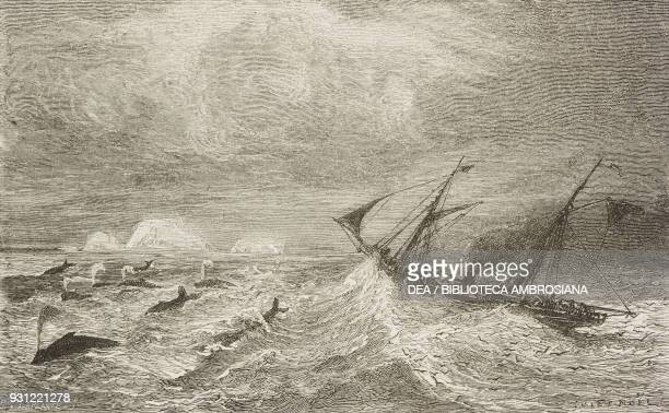 The steamer Arturo sailing among the whales, drawing by Jules Noel from the author's album, from Travels in the Icelandic interior by Natale Nogaret...