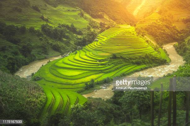 the step rice field in mu-cang-chai with ray light - thaïlande photos et images de collection