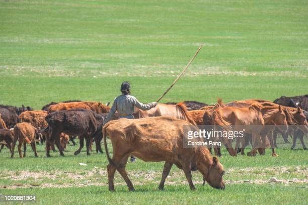 The steppe of Mongolia in summer.