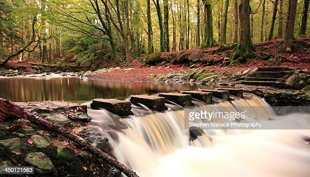 The Stepping Stones - Tollymore