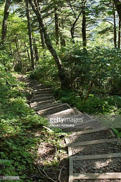 the steps - kazuko kimizuka fotografías e imágenes de stock
