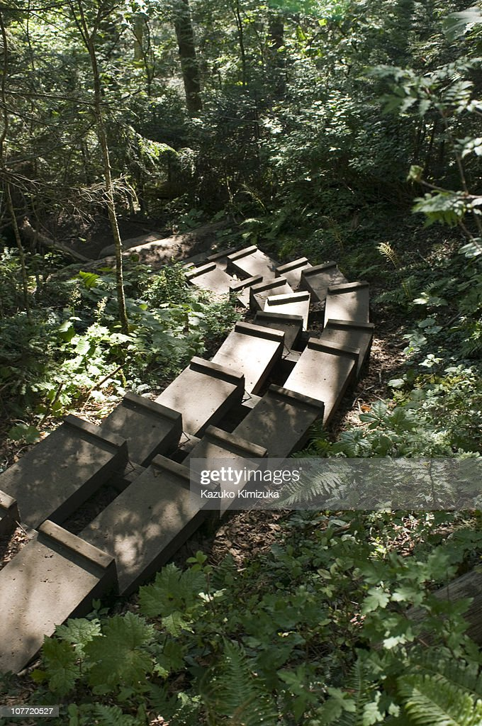 The steps : ストックフォト