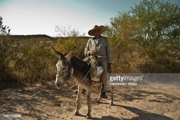 the stereotypical mexican - mexican riding donkey stock photos and pictures