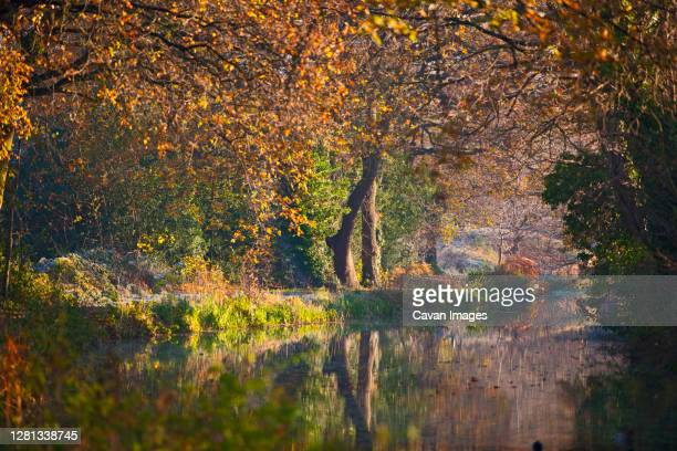 the still basingstoke canal during autumn - canal stock pictures, royalty-free photos & images