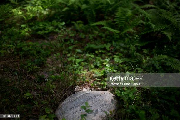 The stone marker for the grave of Dennis Lyndon Pillsbury sits among shrubs on the forest floor at the Cedar Brook Burial Ground The green cemetery...