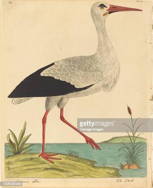 The Stork , published 1731/1738. Artist Eleazar Albin.