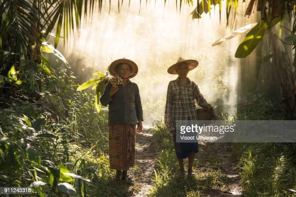 the story of rural people way of life. - cultura indígena imagens e fotografias de stock