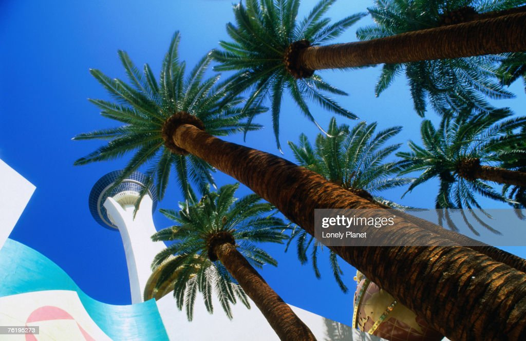 The Stratosphere Hotel and Casino in Las Vegas, Las Vegas, Nevada, United States of America, North America : Stock Photo