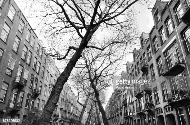 The stree with intertwined trees in Amsterdam