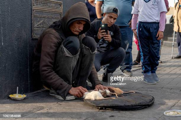 the streets of lima, peru - lima animal stock pictures, royalty-free photos & images