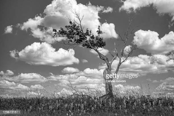 the struggle to survive - big meadows stock pictures, royalty-free photos & images