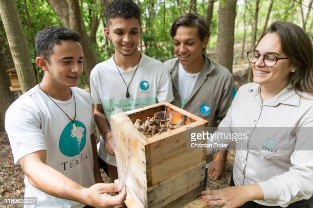 The students Liam Renan and Bruno with the teacher Andressa look into a bee house at the apiary of Instituto Terra on November 21 2019 in Aimorés...