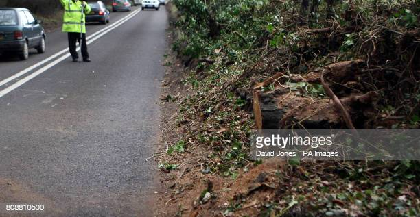The stump of a tree uprooted by high winds on the A458 Bridgnorth Road near Stourton south Staffordshire A 51yearold man who has not yet been named...